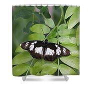 False Diadem Butterfly Shower Curtain