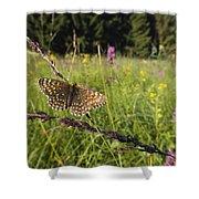 False Heath Fritillary In Meadow Bavaria Shower Curtain
