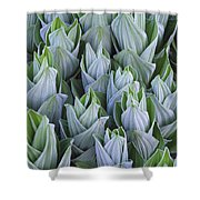 False Hellebore With Frost Colorado Shower Curtain