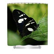 False Zebra Longwing Butterfly Shower Curtain