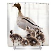 Family Of Ducks Shower Curtain