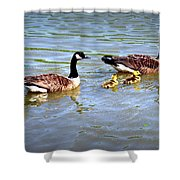 Family Of Geese Out For A Swim Shower Curtain