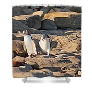 Family Of Nz Yellow-eyed Penguin Or Hoiho On Shore Shower Curtain