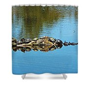 Family Of Turtles Shower Curtain