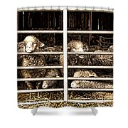 Family Portrait Behind Bars Shower Curtain