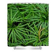 Fan Club Moss Foliage Shower Curtain