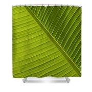Fan Of Green 2 Shower Curtain