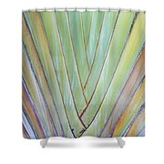 Fan Palm Abstract 2 Shower Curtain