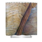 Fan Palm Forced Into A Slant By Rock In Andreas Canyon-ca Shower Curtain