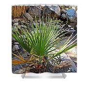 Fan Palm Leaf Over Andreas Creek In Indian Canyons-ca Shower Curtain