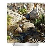 Fan Palm Leaves And Shadows Over Andreas Creek Rocks In Indian Canyons-ca Shower Curtain