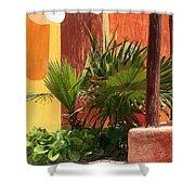 Fan Palm On Patio Shower Curtain