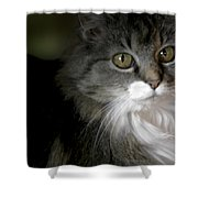 Fancy Cat Shower Curtain