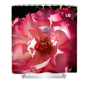 Fancy Flaminco Rose Shower Curtain