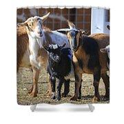 Fancy Goats Shower Curtain
