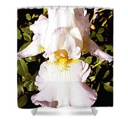 Fancy Lady White Iris Shower Curtain
