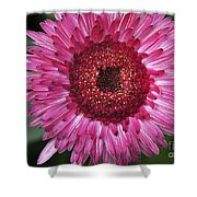 Fancy Pink Daisy Shower Curtain