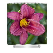Fancy Red Wine Daylily Shower Curtain