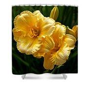Fancy Yellow Daylilies Shower Curtain