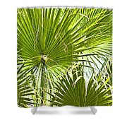 Tropical Fans Shower Curtain