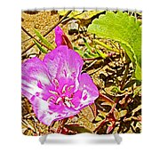 Farewell To Spring At Point Reyes National Seashore-california Shower Curtain