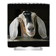 Farm Favorite Shower Curtain