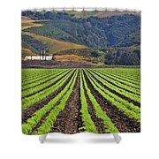 Farm Lands Of The Central Coast By Diana Sainz Shower Curtain