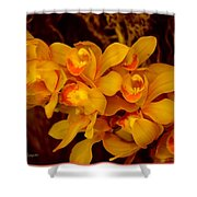 Fascinating Beauty Shower Curtain
