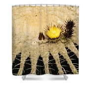 Fascinating Cactus Bloom - Soft And Fragile Among The Thorns Shower Curtain