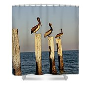 Fashionably Late Shower Curtain