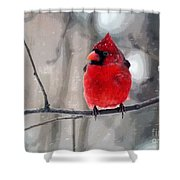 Fat Cardinal In The Snow Shower Curtain