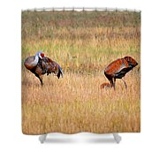 Father An Son Shower Curtain