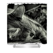 Fatigued Feline Shower Curtain