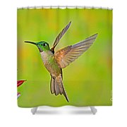 Fawn-breasted Brilliant Hummingbird Shower Curtain