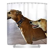 Fawn Greyhound Dogs Profile Shower Curtain