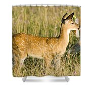 Fawn In Big Meadows Shower Curtain
