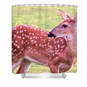 Fawn In The Waning Summer Shower Curtain