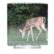 Fawn Meadow Shower Curtain