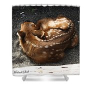Fawn Resting Shower Curtain
