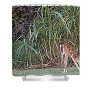 Fawn Snacking Shower Curtain