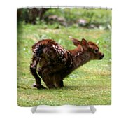 Fawn's First Steps Shower Curtain