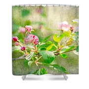 Feast Of Life 20 - Morning Mists Shower Curtain