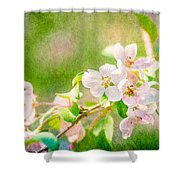 Feast Of Life 24 - Delight Shower Curtain