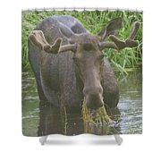 Feasting  Shower Curtain