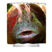 Feather Blenny - A Fish  Shower Curtain
