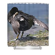 Feather Care Shower Curtain