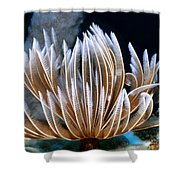 Feather Duster Worms 2 Shower Curtain