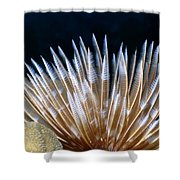 Feather Duster Worms 4 Shower Curtain