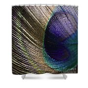 Feather Fan Shower Curtain