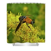 Feather-legged Fly On Goldenrod - Trichopoda Shower Curtain